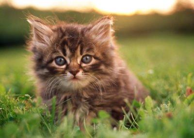 Adorable-Kitty-1440x900-desktopia.net