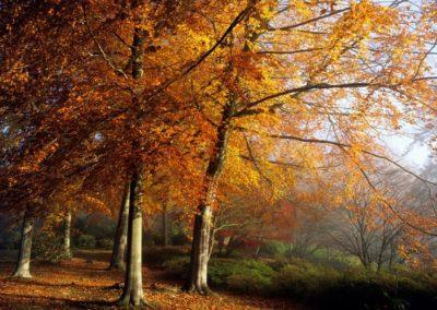 Autumn-England-1440x900-desktopia.net