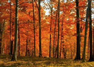 Autumn-Forest-Pennsylvania-1440x900-desktopia.net